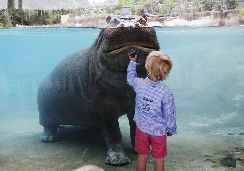 fun things to do in dallas with kids Dallas Zoo