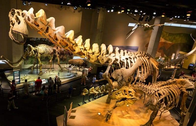 fun things to do in dallas with kids dino